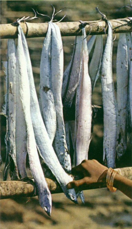 A picture of drying fish